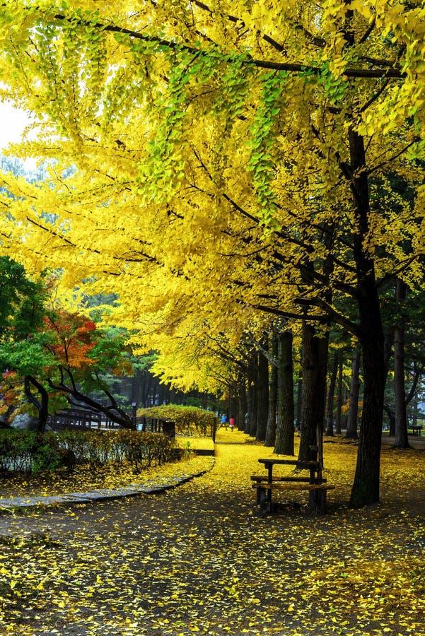 Nami island in autumn stock image