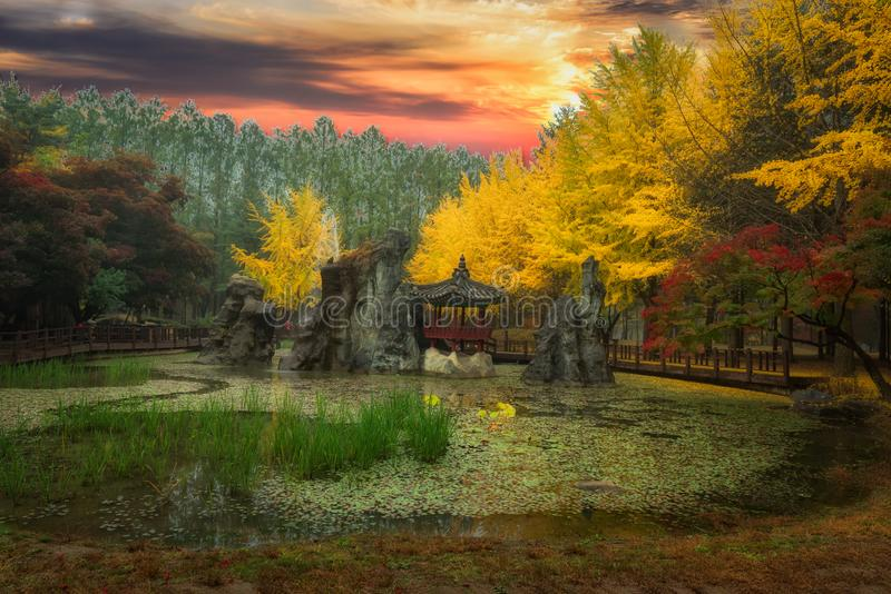 Nami island in the fall season stock images