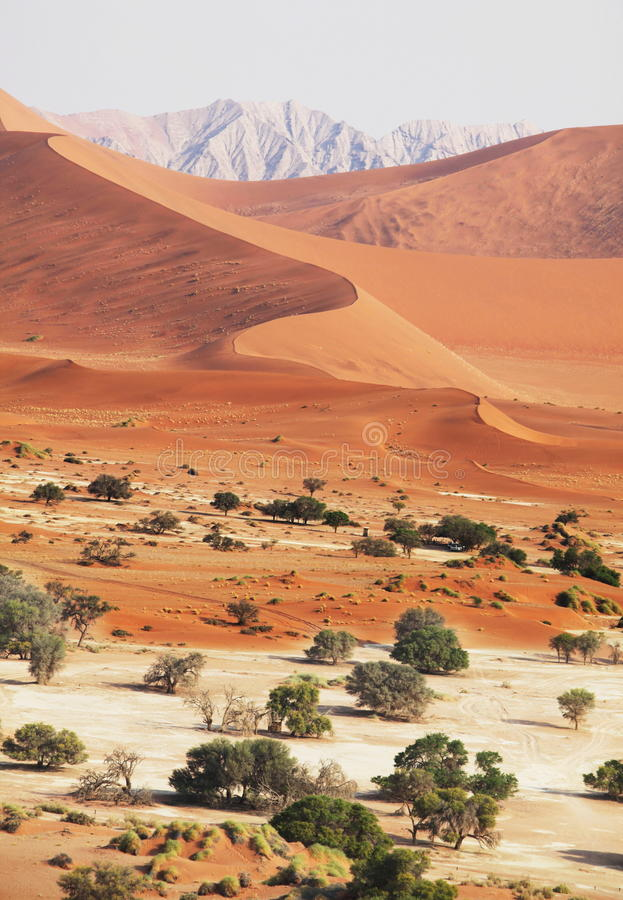 Namib imagens de stock royalty free