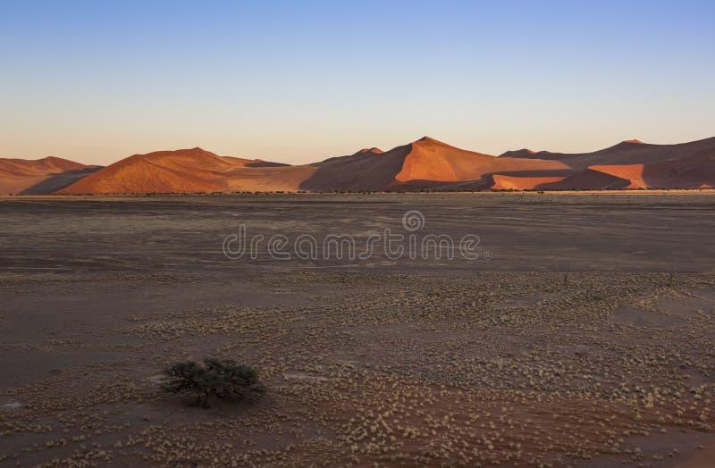 Namib royalty-vrije stock afbeeldingen