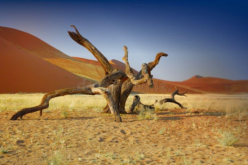 Namib Desert (Namibia) stock photography