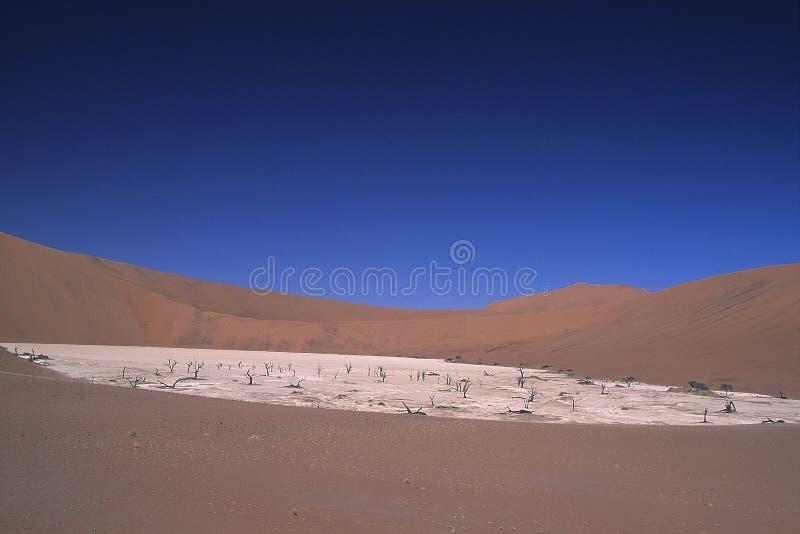 Namib Naukluft公园沙丘  库存照片