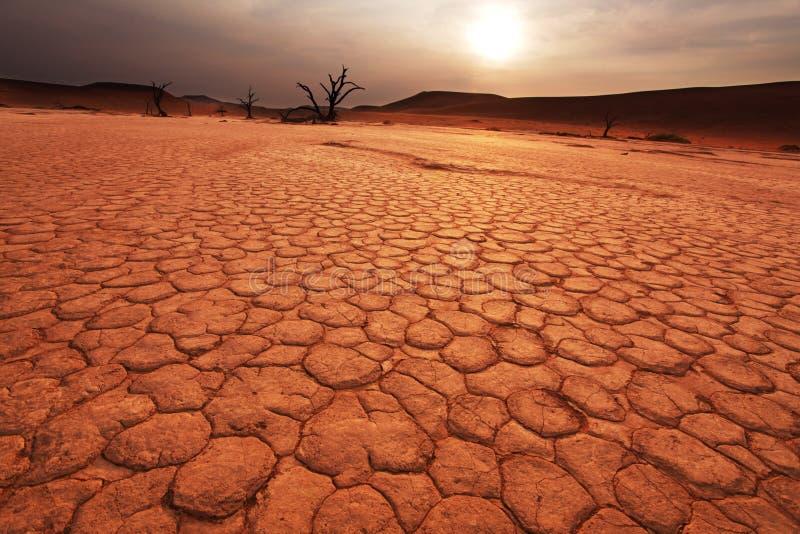 Namib no por do sol fotografia de stock royalty free
