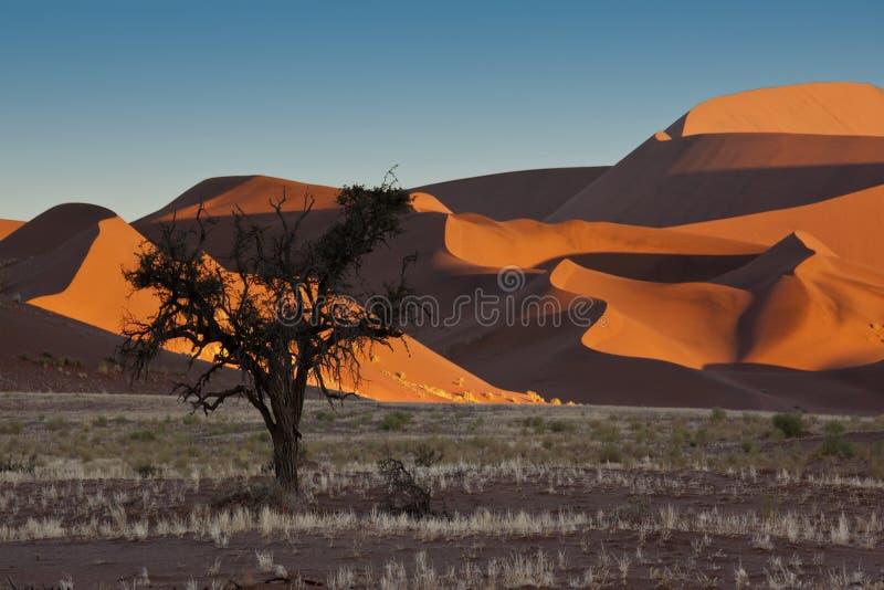 Namib-nuakluft Desert - Sossusvlei - Namibia stock photos