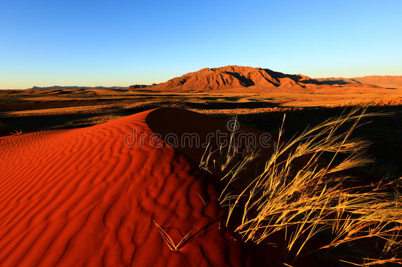 Namib Rand NR – Wolwedans. Glowing red sand dune with Losberg in background. Picture was taken shortly before sunset in Wolwedans, Namib Rand Nature royalty free stock photos