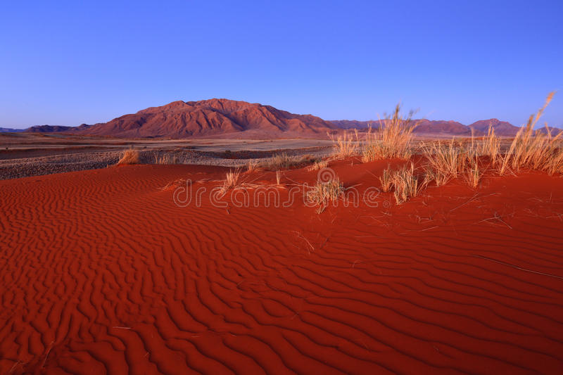 Namib Rand NR – Wolwedans. Unspoiled red sand dune with Losberg in background. Picture was taken after sunset in Wolwedans, Namib Rand Nature Reserve royalty free stock photography