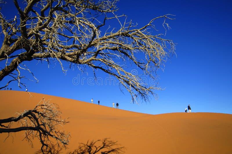 Namibia royalty free stock photography