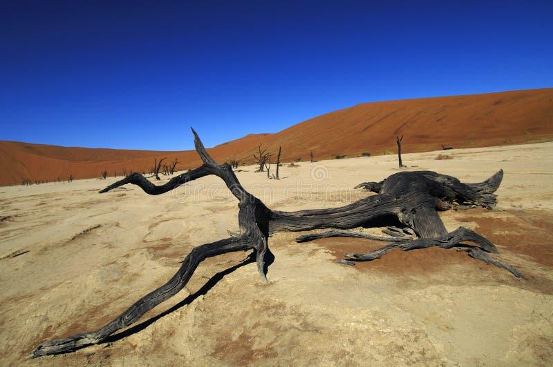 namibia fotografia stock