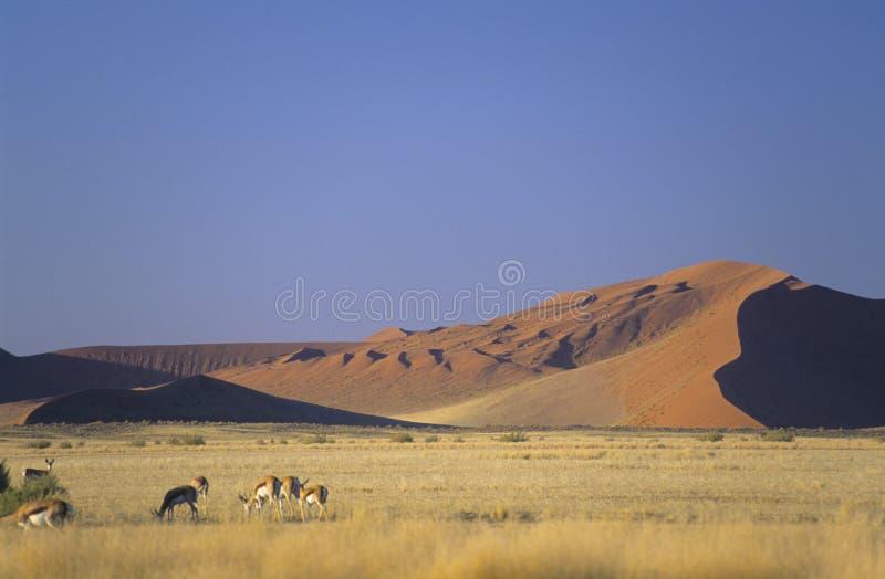 Namibia obrazy stock