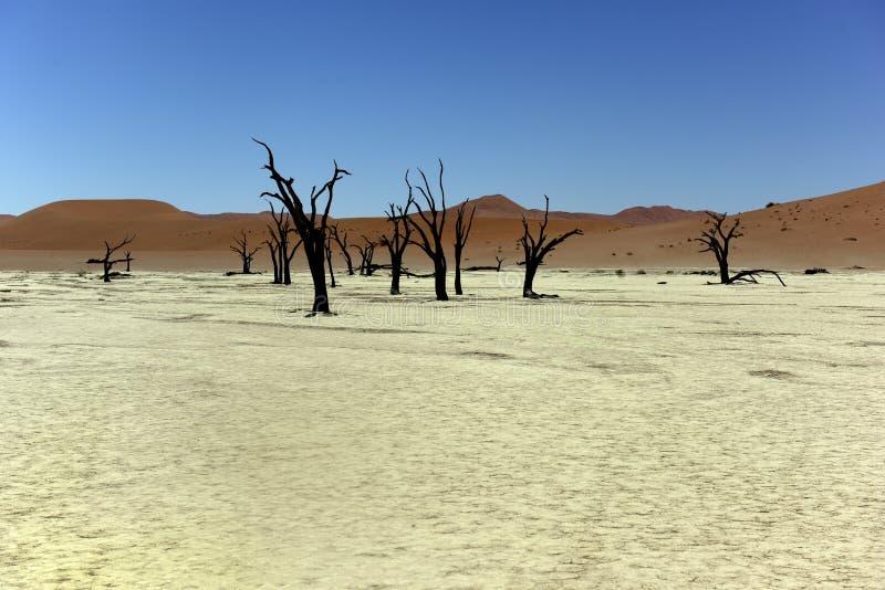 Namibia Deadvlei arkivfoton