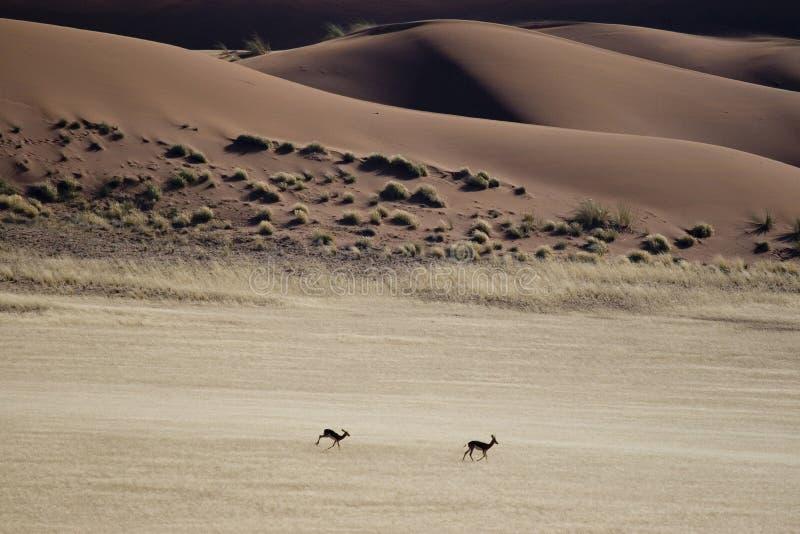 Namibia desert stock photo