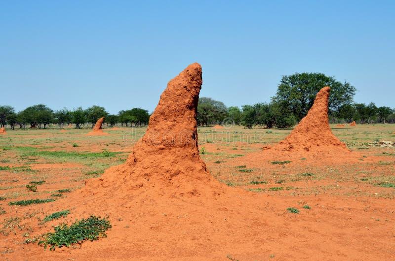 Namibia, montón de la termita foto de archivo