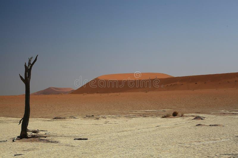 Namibia Namib öken, arkivbild
