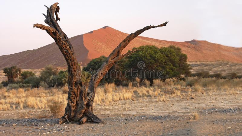 Namibia Namib öken, royaltyfria bilder