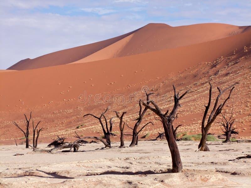 namibia nieżywy vlei obraz royalty free