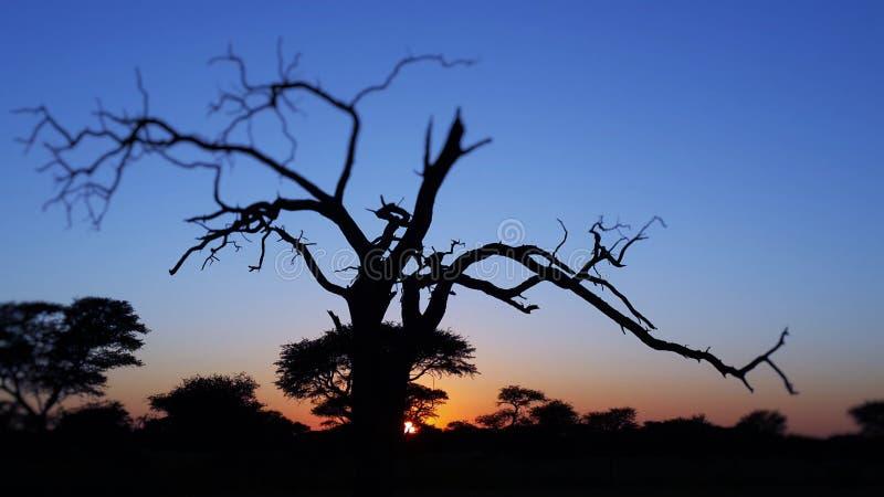 namibia solnedgång arkivbilder