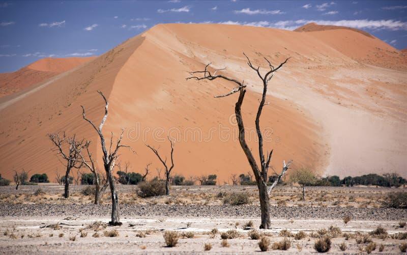 Namibia Sossusvlei royaltyfria bilder