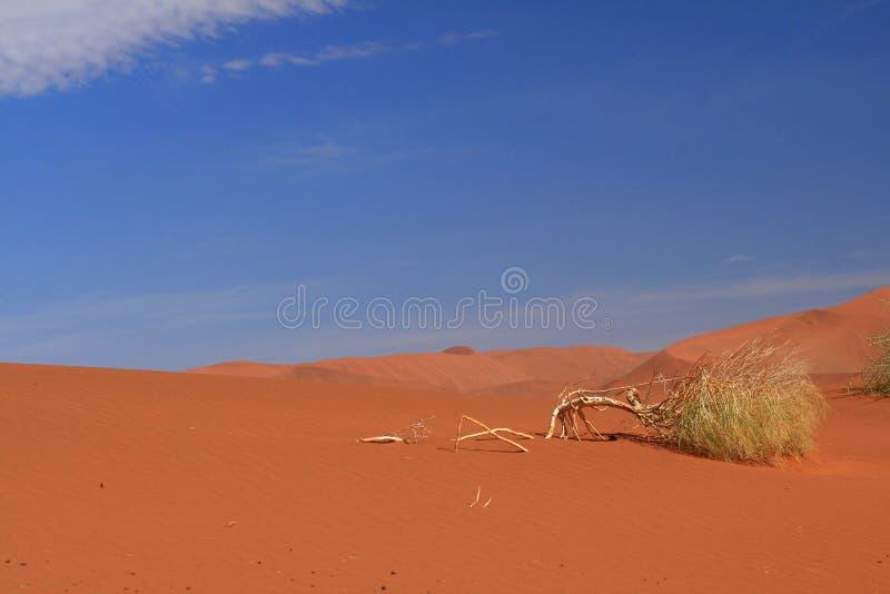 Namibian desert view stock photography