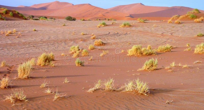 Download Namibian sand dunes stock image. Image of desert, salt - 16370677
