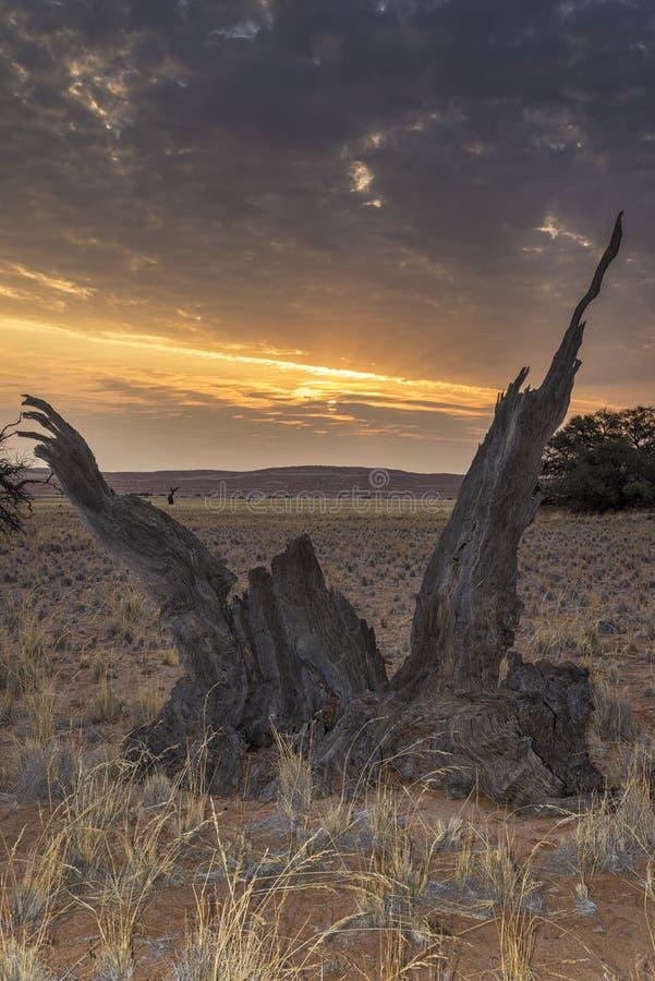 namibian solnedgång arkivfoton