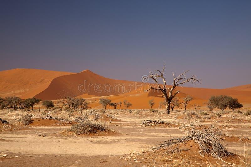 Namibian woestijn royalty-vrije stock foto's