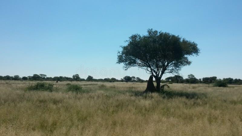 Namibijska sawanna obrazy stock