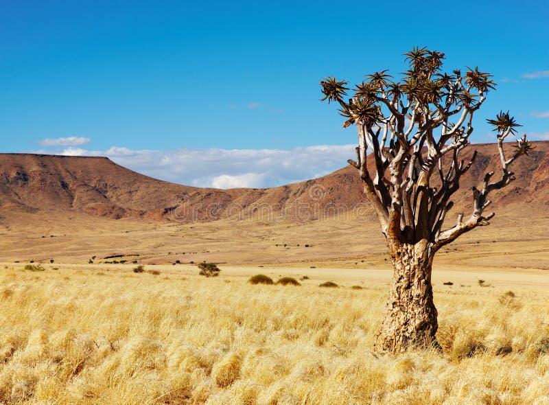 namibijski krajobrazu zdjęcia royalty free