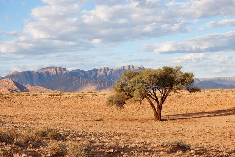 Namibische Landschaft mit Baum lizenzfreies stockbild