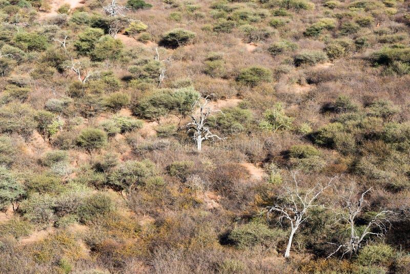 Namibische Savannenwaldansicht von der Spitze Waterberg Platea stockfotos