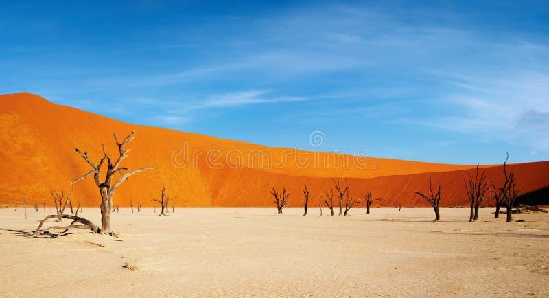 Namibische Wüste lizenzfreies stockbild
