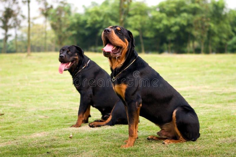 namierzyć psa zdjęcie royalty free