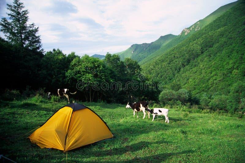 namiot żółty zdjęcia stock