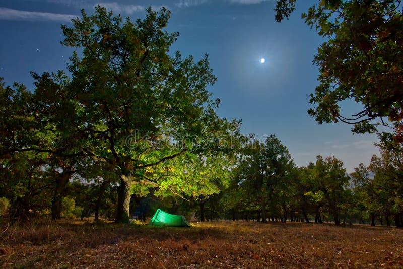 Namiotowy camping przy nocą w lesie pod jasnym światłem fotografia royalty free