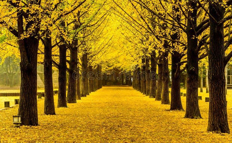 Namiseomeiland in de herfst, Zuid-Korea royalty-vrije stock fotografie