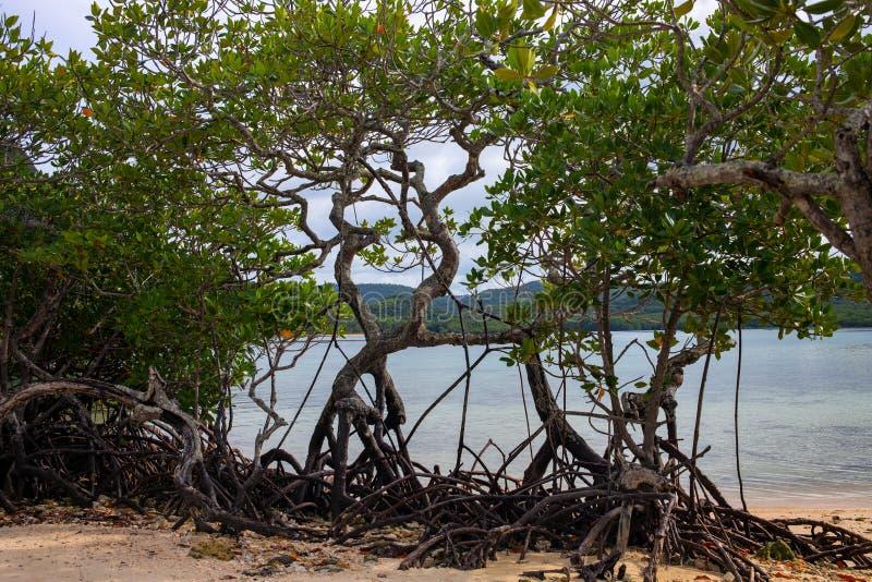 Namorzynowi drzewa na ? zdjęcia royalty free