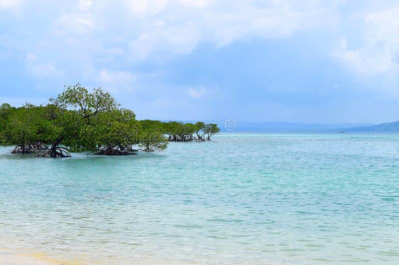 Namorzynowi drzewa w krysztale Neil wyspa, Andaman Nicobar wyspy, India - jasna Przejrzysta Błękitna woda morska z Chmurnym niebe zdjęcia royalty free