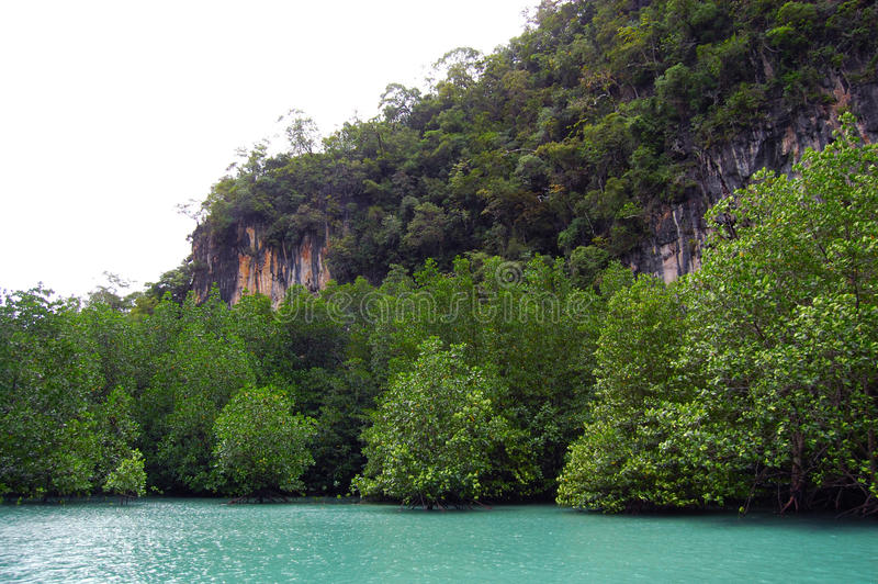 Namorzynowi lasy fotografia stock