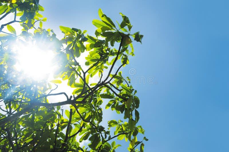 Namorzynowy drzewo obraz royalty free