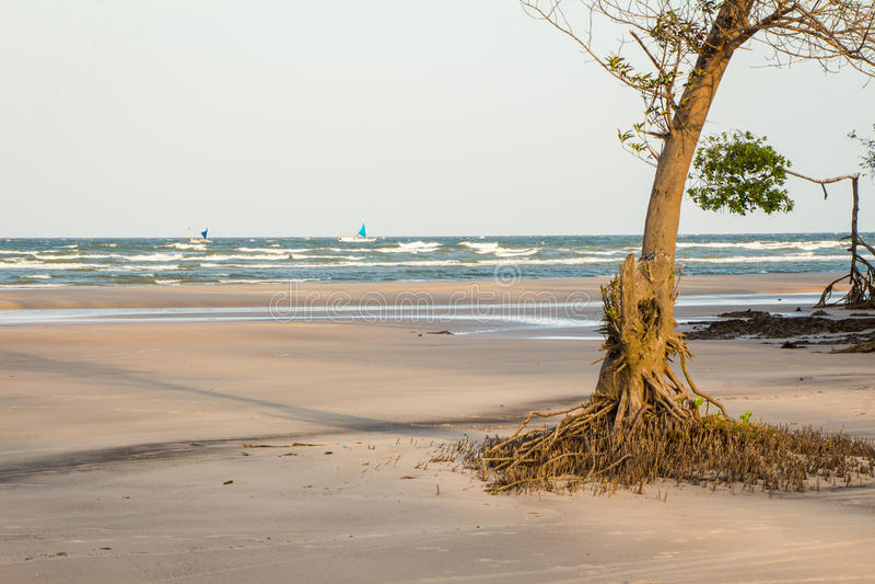 Namorzynowy drzewo zdjęcia stock