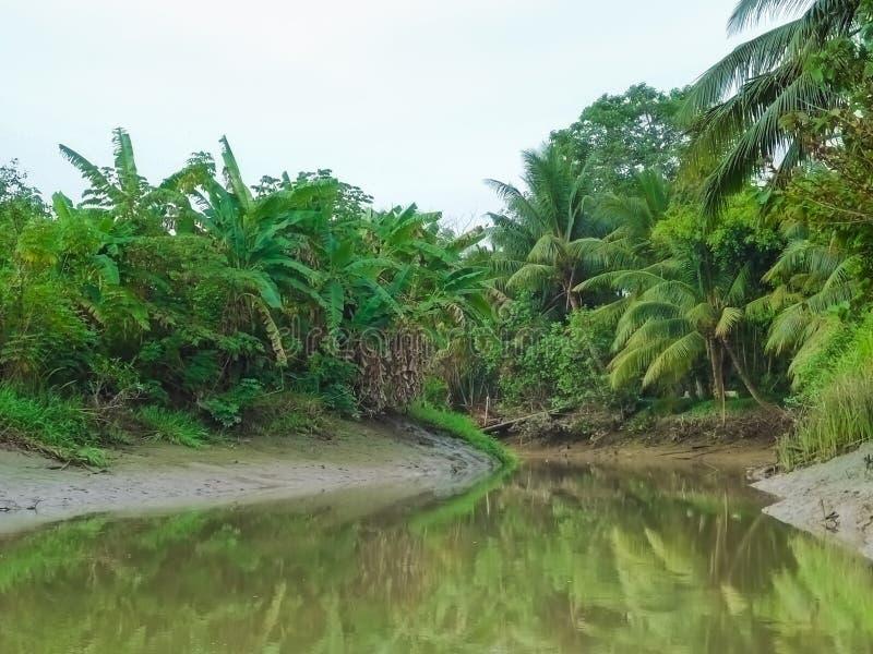 Namorzynowy las z łódkowatym bieg wewnątrz Może Tho, Mekong delta, południe Wietnam zdjęcia royalty free