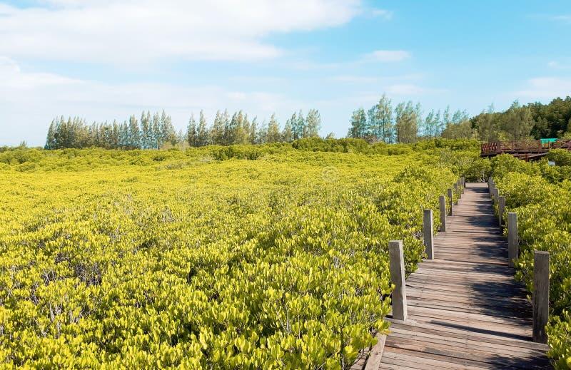 Namorzynowy lasowy boardwalk zdjęcia stock