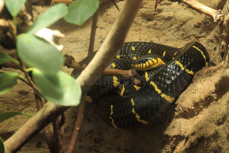 Namorzynowy wąż zdjęcie royalty free