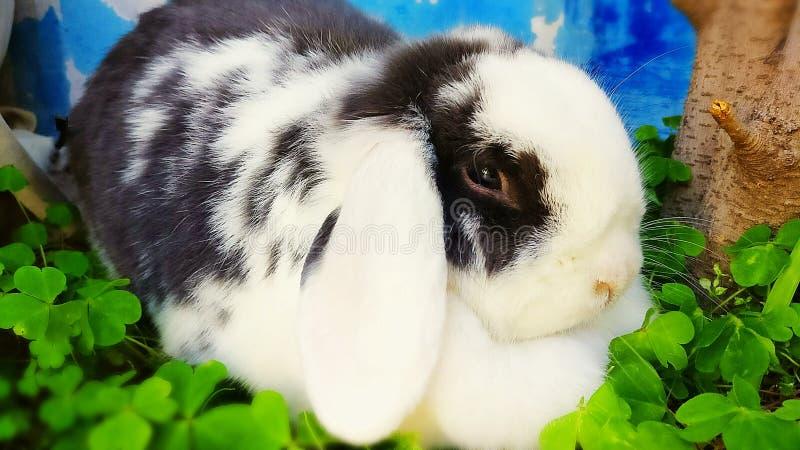 Nana rabbit stock images