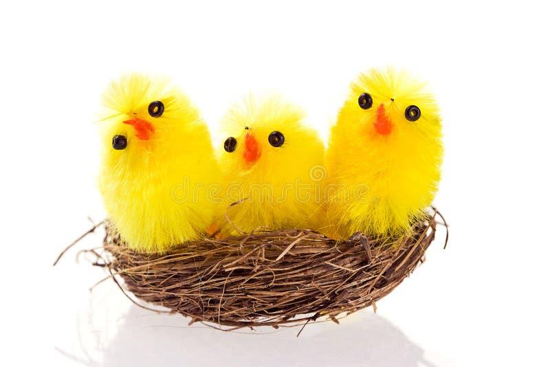 Nanas de Pâques dans un emboîtement sur le fond blanc image stock