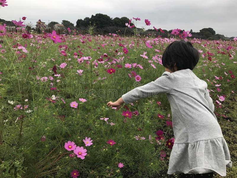 Nanasato parkerar royaltyfri fotografi