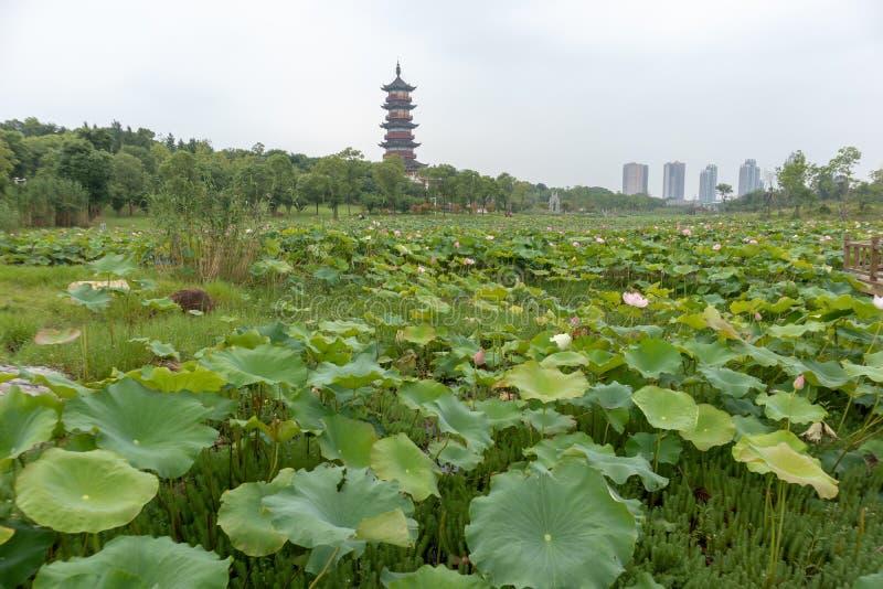 Nanchang όπως το πάρκο υγρότοπου λιμνών στοκ φωτογραφία με δικαίωμα ελεύθερης χρήσης