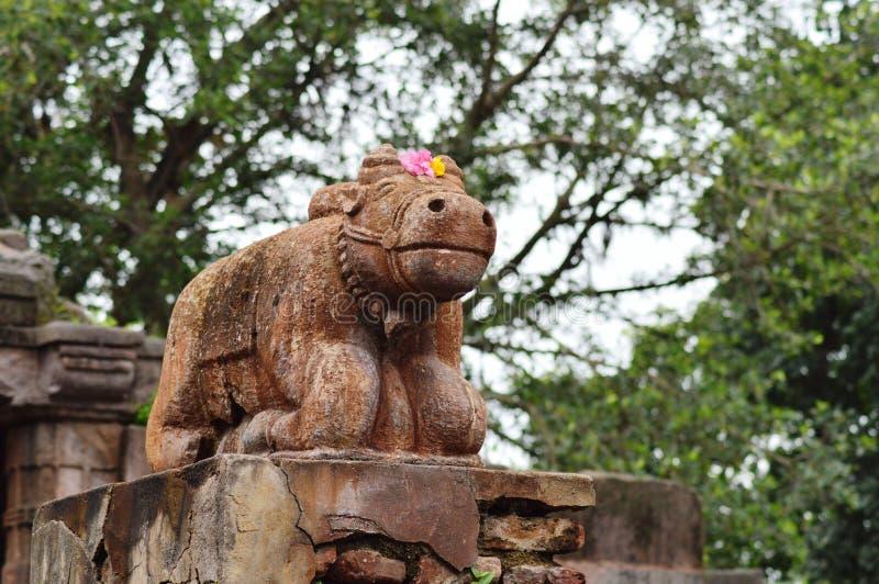 Nandi på Polo Forest, Gujarat royaltyfri foto