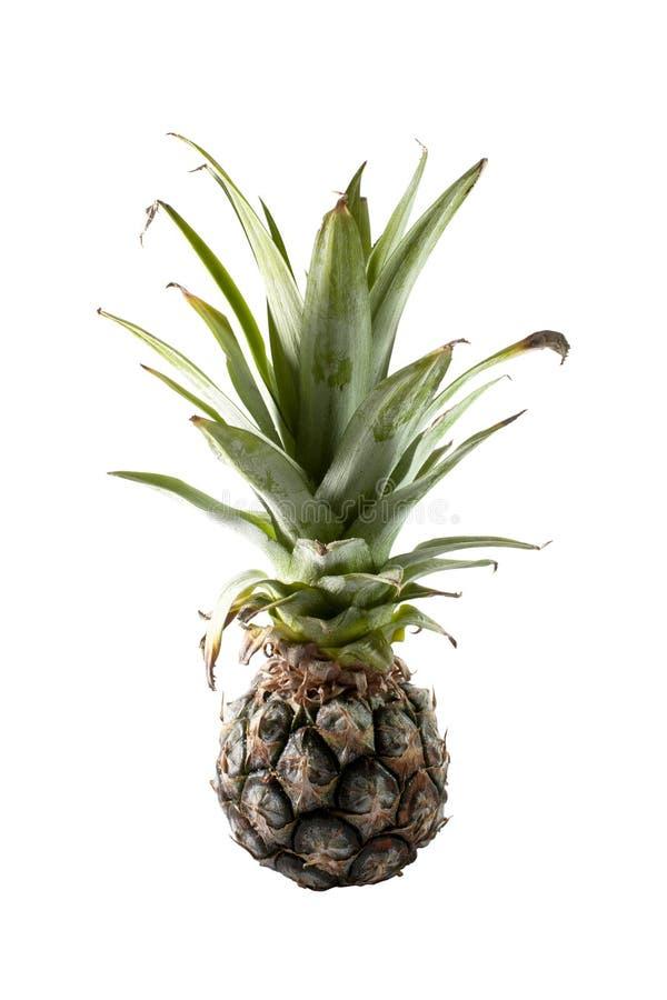 Download Nang Lae Pineapple stock image. Image of pineapple, plant - 27445005