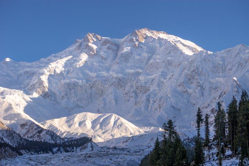 Nanga Parbat coperto della neve di sera e di luce solare bianca su fotografie stock