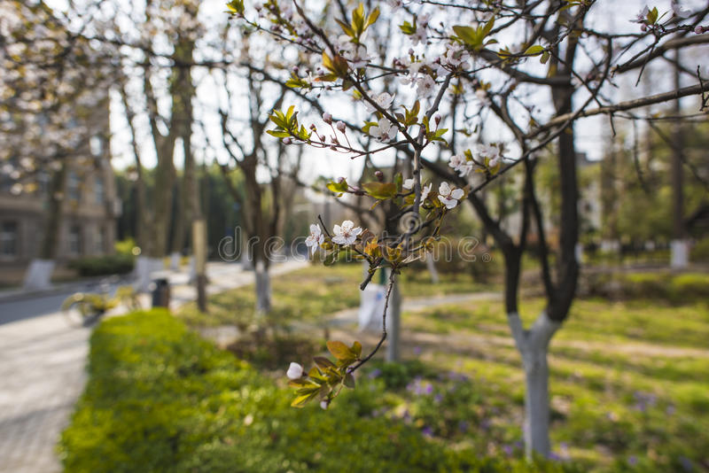 Nanjing Forestry University campus stock photos